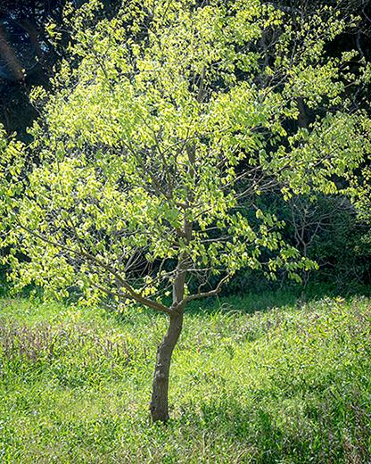 森の新緑。_b0022268_23434782.jpg