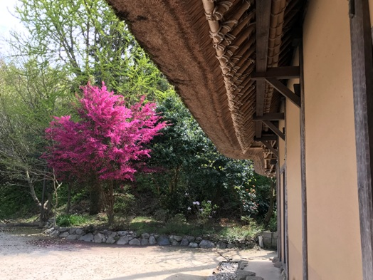 重要文化財 千年家(横大路家住宅)_b0214473_218192.jpg