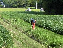 各農家へのホームステイ(農作業実習) _a0208976_16425122.jpg
