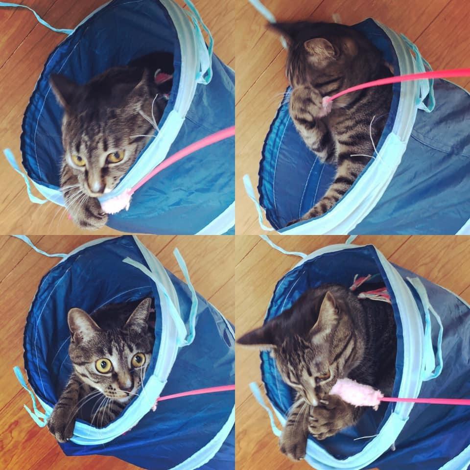 猫トンネル_b0195783_17360982.jpg
