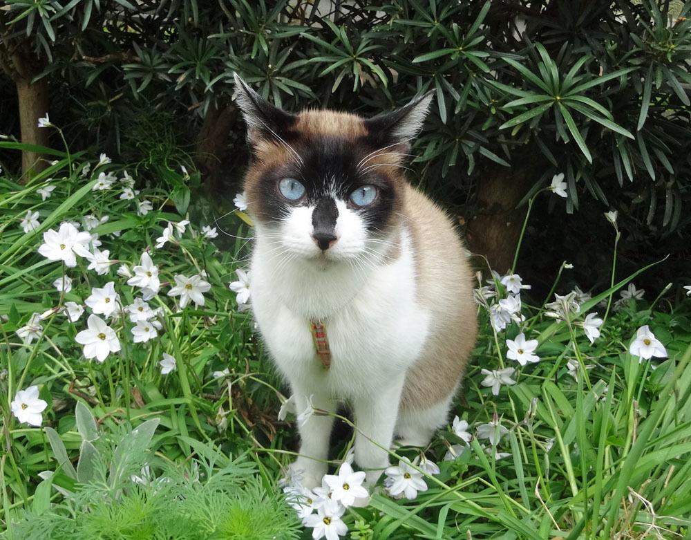 猫、ねこ、ネコと暮らす日々_b0114798_16372243.jpg