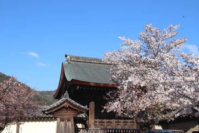 嵐山天龍寺 咲き納め_e0048413_20531886.jpg