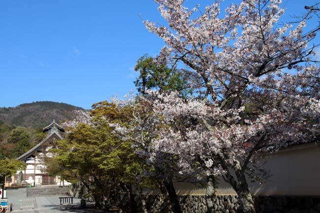 嵐山天龍寺 咲き納め_e0048413_20533252.jpg