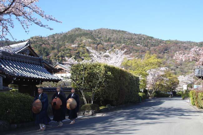 嵐山天龍寺 咲き納め_e0048413_20533601.jpg