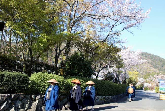 嵐山天龍寺 咲き納め_e0048413_20534448.jpg