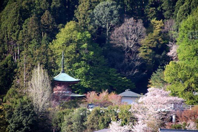 嵐山天龍寺 咲き納め_e0048413_20535296.jpg