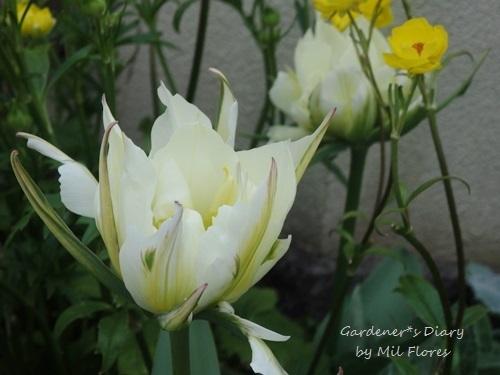En el estilo de Japón; Spring version._e0365614_18102687.jpg