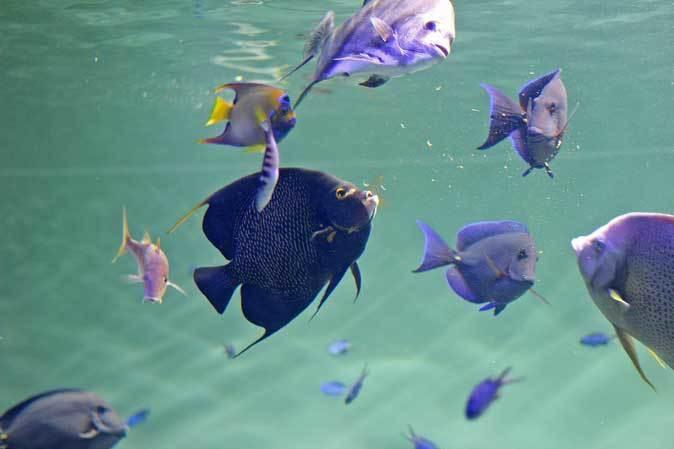 葛西臨海水族園:カリブ海③~ただいま清掃中!_b0355317_20241598.jpg