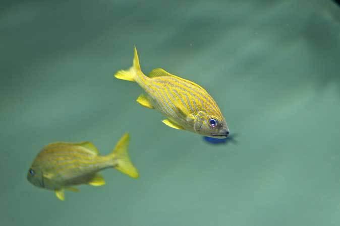 葛西臨海水族園:カリブ海③~ただいま清掃中!_b0355317_20272247.jpg