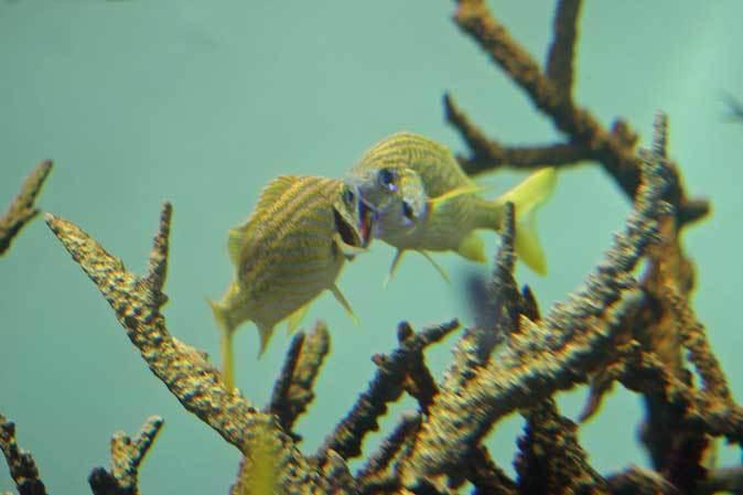 葛西臨海水族園:カリブ海③~ただいま清掃中!_b0355317_20304260.jpg
