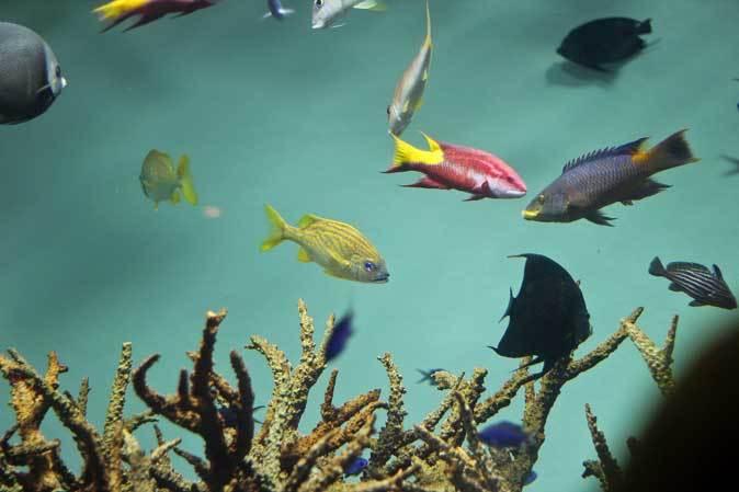葛西臨海水族園:カリブ海③~ただいま清掃中!_b0355317_20323825.jpg