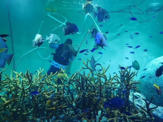 葛西臨海水族園:カリブ海③~ただいま清掃中!_b0355317_20385970.jpg