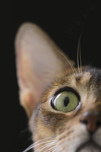 [猫的]ブラックシリーズ_e0090124_00260996.jpg