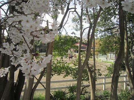 いつもの大きな公園_b0177436_21550749.jpg