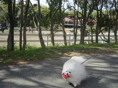 いつもの大きな公園_b0177436_21552528.jpg