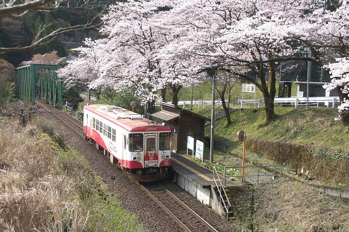 2019年・春/鉄道と桜#1-樽見鉄道_e0056449_18144384.jpg