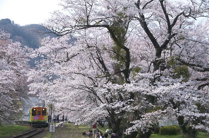 2019年・春/鉄道と桜#1-樽見鉄道_e0056449_18164974.jpg