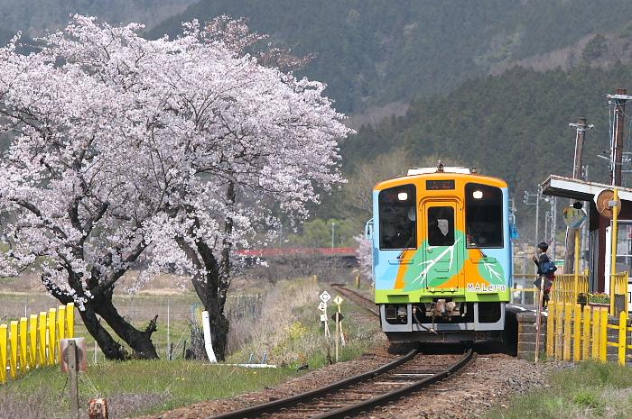 2019年・春/鉄道と桜#1-樽見鉄道_e0056449_18183379.jpg