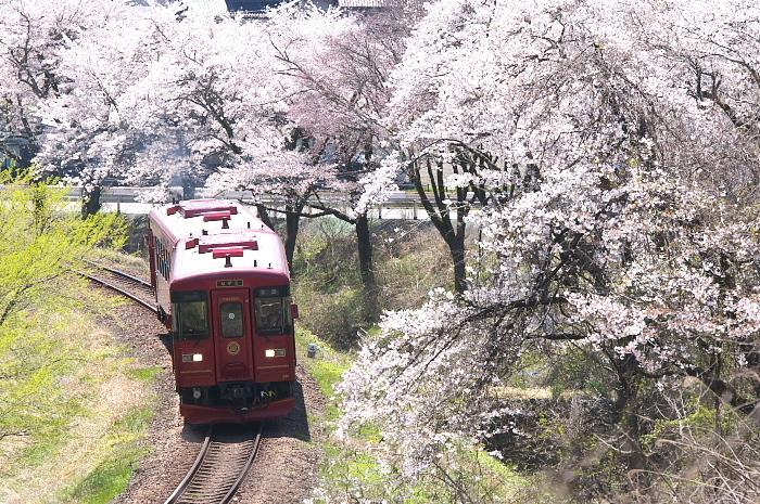 2019年・春/鉄道と桜#2-長良川鉄道_e0056449_18235262.jpg
