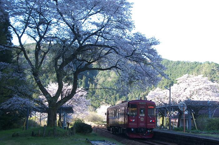 2019年・春/鉄道と桜#2-長良川鉄道_e0056449_18260223.jpg