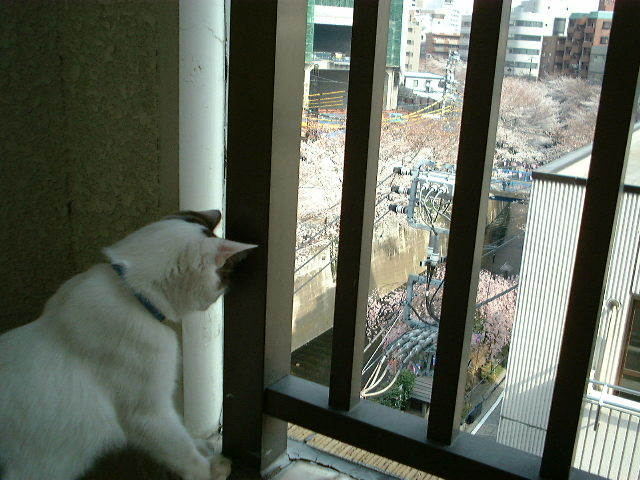 続々その二/猫尻大橋からのお知らせ_d0057858_15491855.jpg
