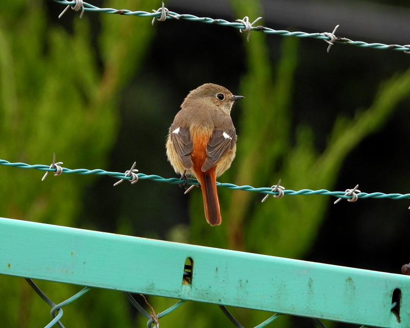 花より 小鳥さん_c0305565_17554161.jpg