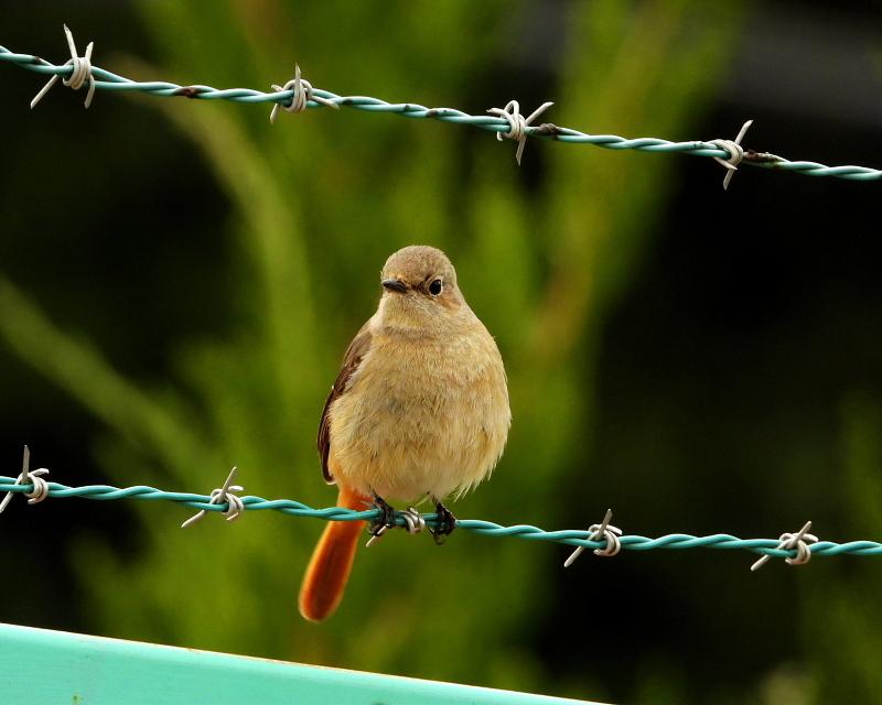 花より 小鳥さん_c0305565_17555271.jpg