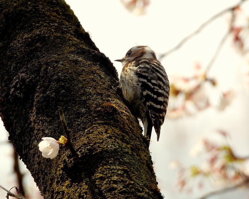 花より 小鳥さん_c0305565_17565153.jpg