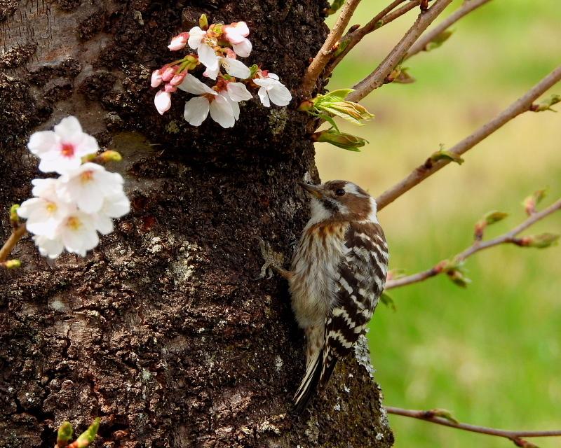 花より 小鳥さん_c0305565_17570323.jpg
