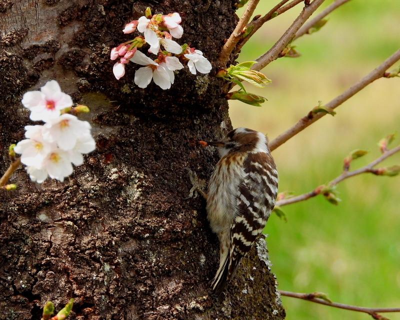 花より 小鳥さん_c0305565_17571892.jpg