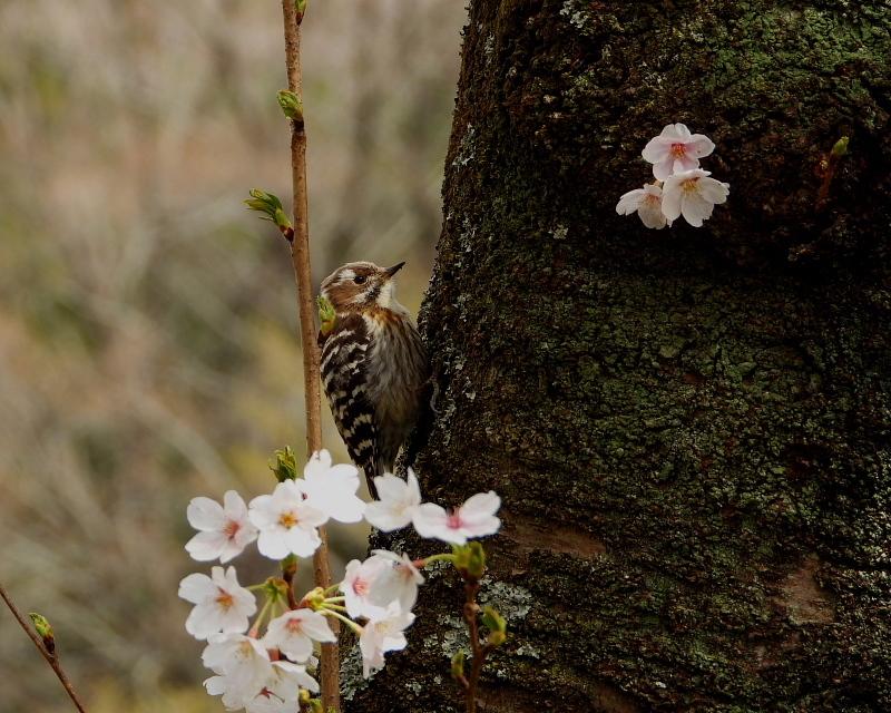 花より 小鳥さん_c0305565_17575589.jpg