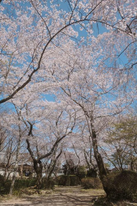 桜 2019_f0021869_23015308.jpg