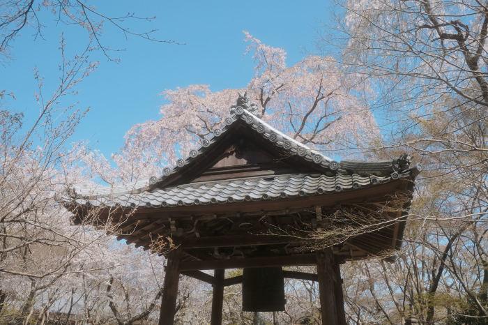 桜 2019_f0021869_23015479.jpg