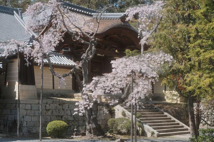 桜 2019_f0021869_23015532.jpg