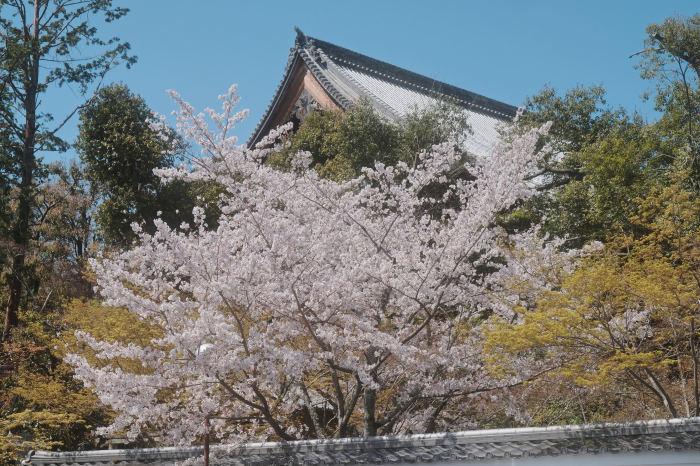 桜 2019_f0021869_23015671.jpg