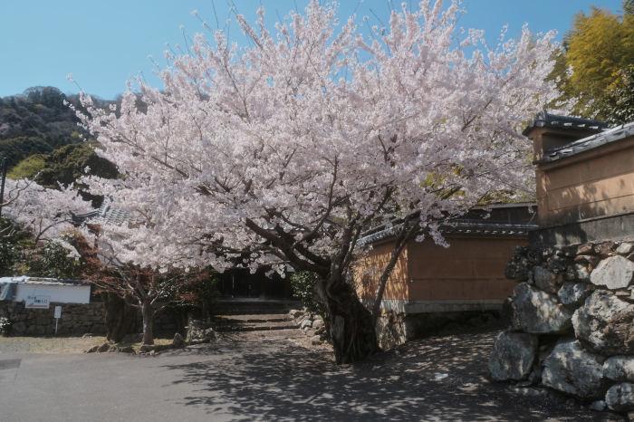 桜 2019_f0021869_23015778.jpg