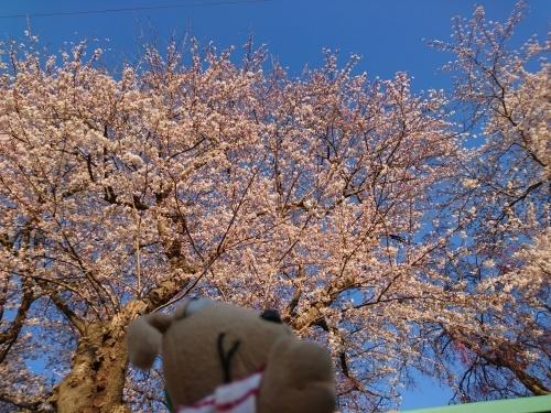 春爛漫!_c0158573_07301229.jpg