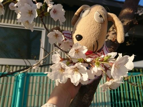 春爛漫!_c0158573_07304519.jpg