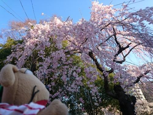 春爛漫!_c0158573_07312331.jpg