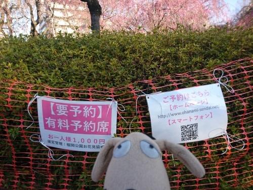 春爛漫!_c0158573_07341629.jpg