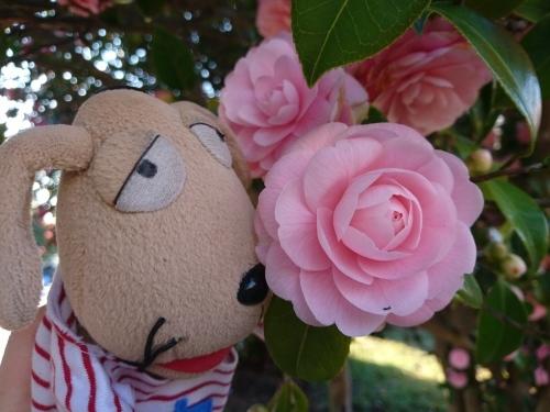 春爛漫!_c0158573_07361508.jpg