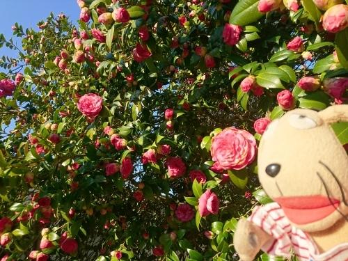 春爛漫!_c0158573_07364821.jpg