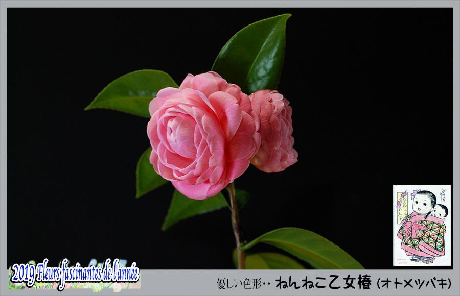 c0009981_17073993.jpg