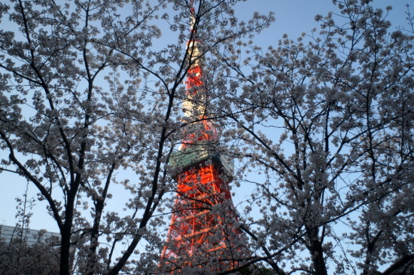 本番前でも櫻は愛でたい! 4/4_c0180686_01121104.jpg
