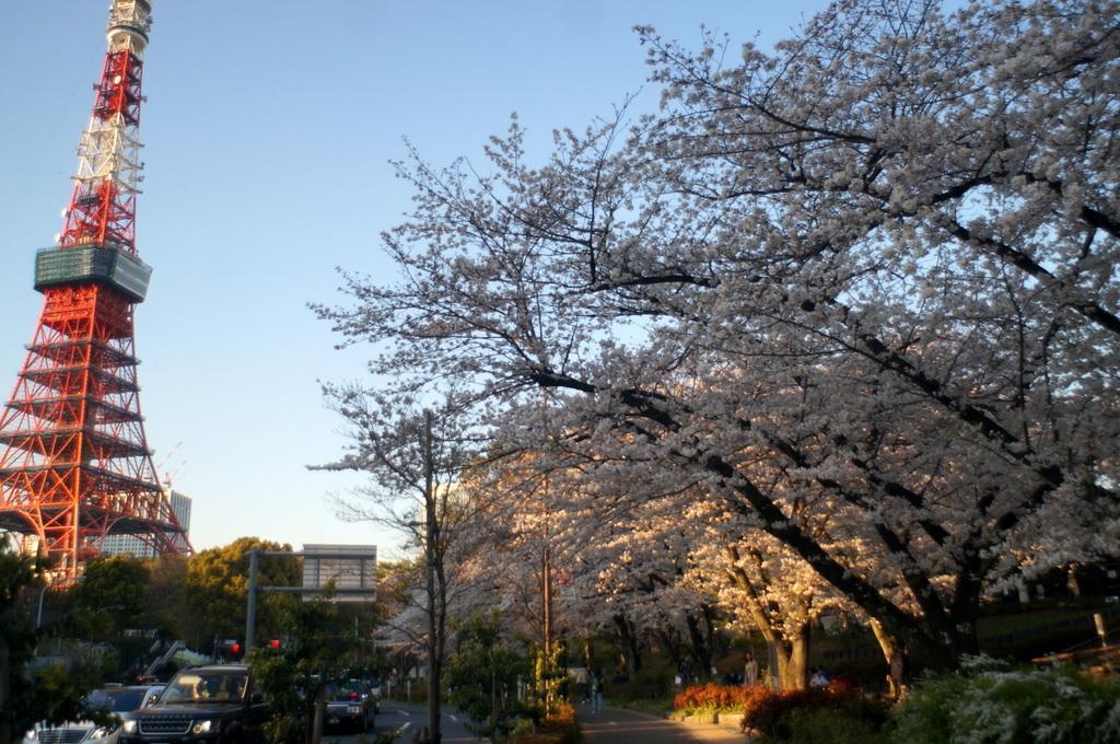 本番前でも櫻は愛でたい! 4/4_c0180686_01122062.jpg