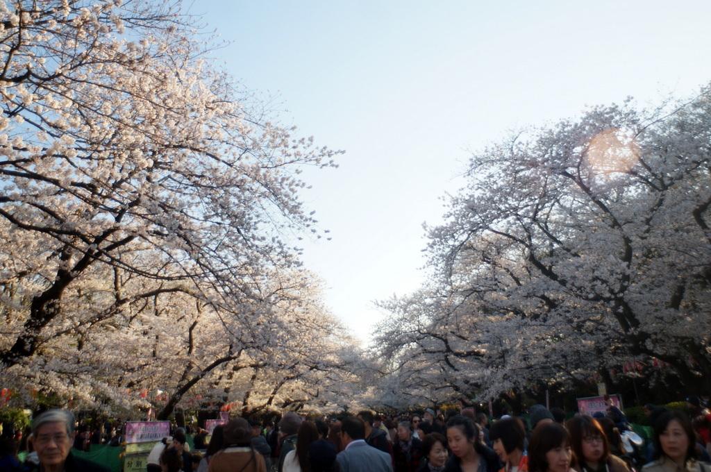 本番前でも櫻は愛でたい! 4/4_c0180686_01124572.jpg