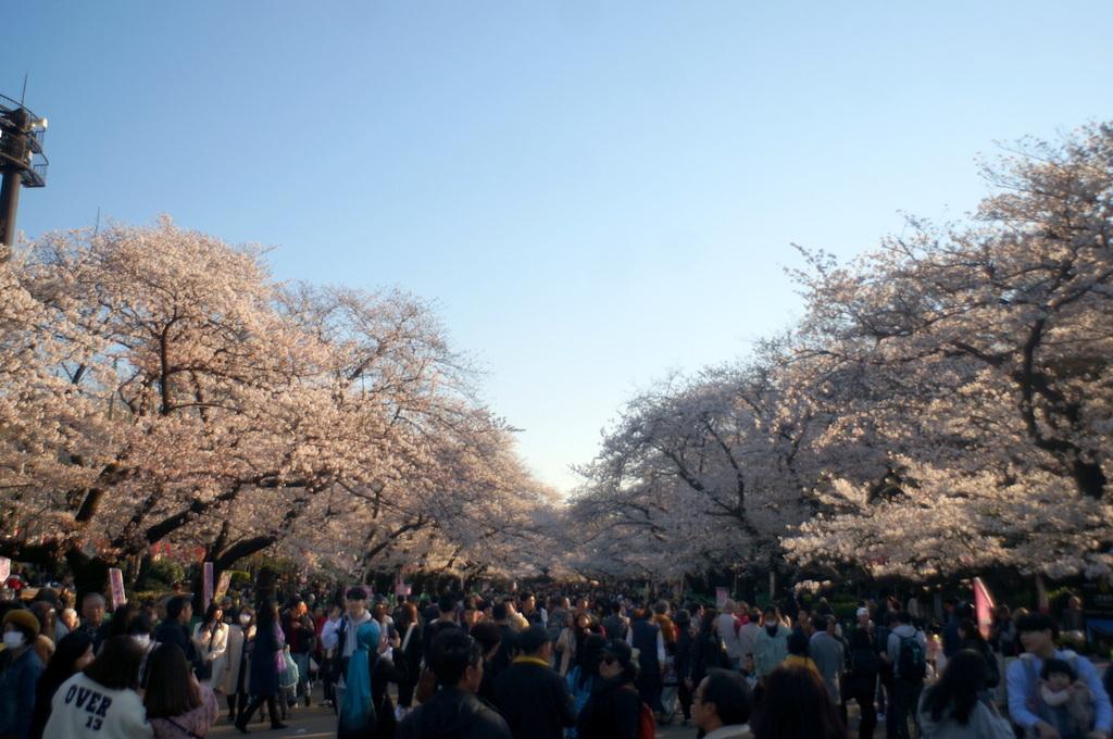 本番前でも櫻は愛でたい! 4/4_c0180686_01124822.jpg