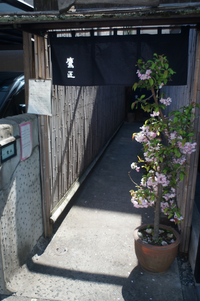 本番前でも櫻は愛でたい! 4/4_c0180686_01141711.jpg