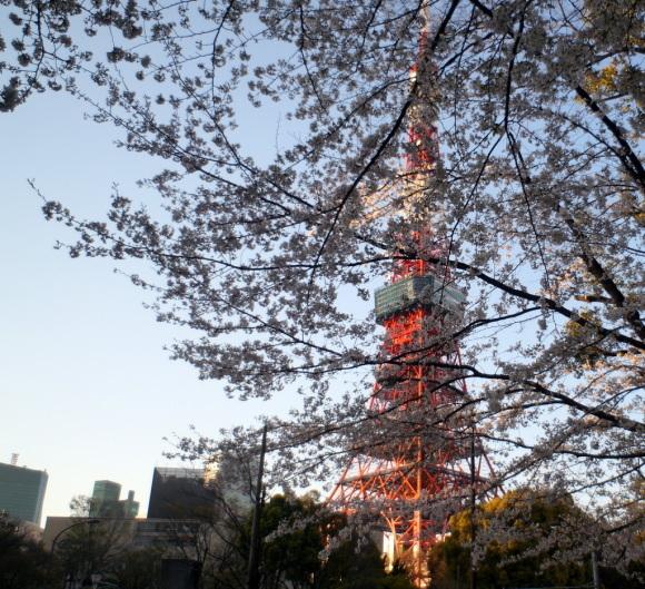 本番前でも櫻は愛でたい! 4/4_c0180686_01152594.jpg