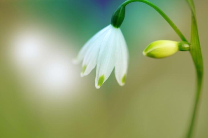 春景色_e0305388_15004376.jpg